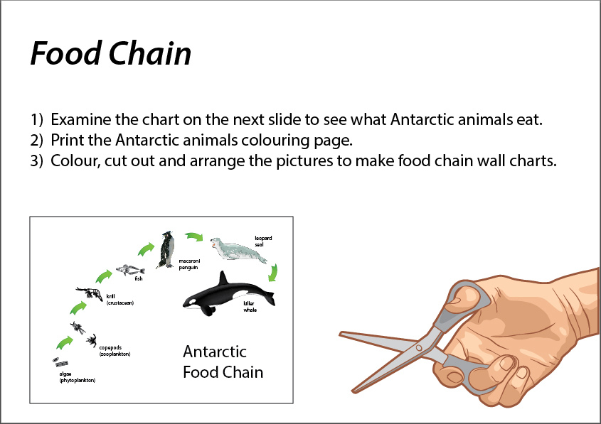 Food chain and food web skills worksheet