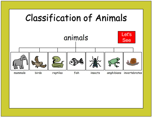 Animal classification worksheet second grade