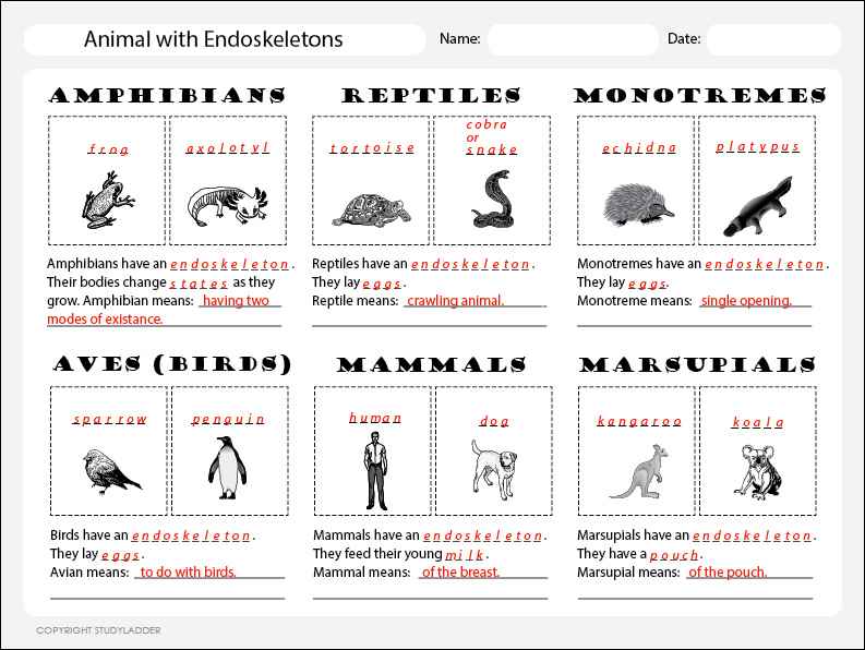 Animal Classification Chart 1 Answers, Science skills ...