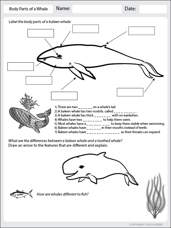 Body Parts Of A Whale Worksheet Theme Based Learning Skills Online