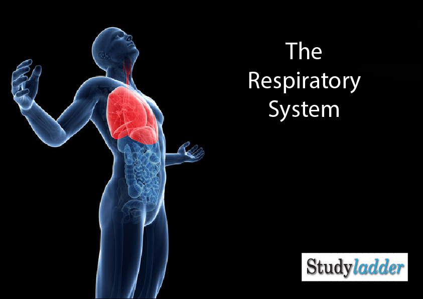The Respiratory System Studyladder Interactive Learning Games