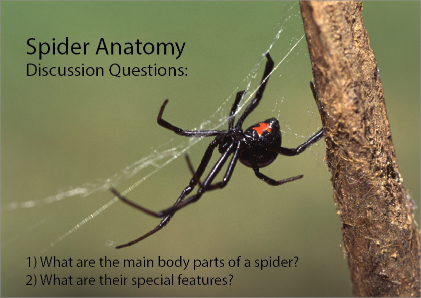 Spider Anatomy, Science skills online, interactive activity lessons