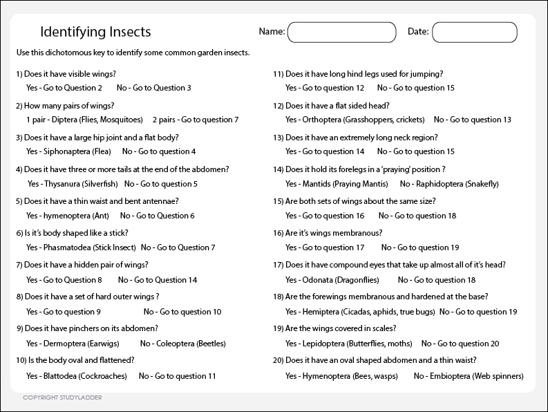 Classifying Insects, Science skills online, interactive activity ...