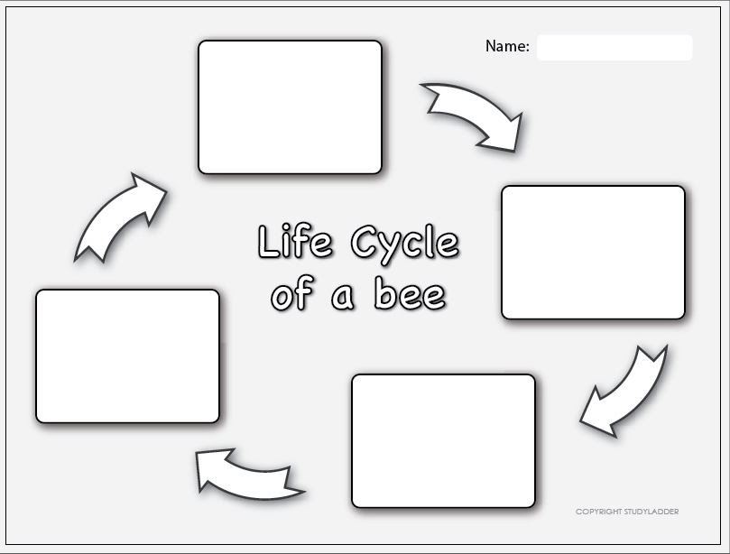 life cycle of a bee worksheet 1