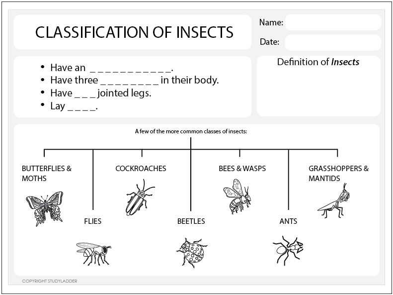 Classification of Insects Worksheet Science skills online – Classification Worksheet Biology