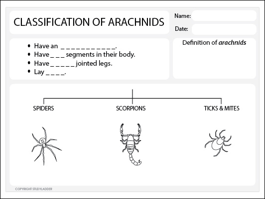Arachnids Classification Worksheet Science skills online – Taxonomy Classification Worksheet