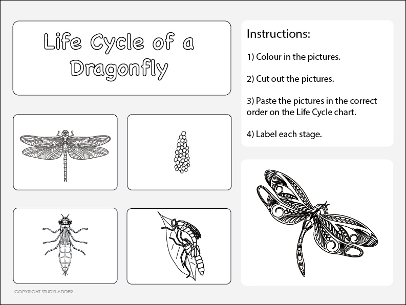 Life Cycle of a Dragonfly Worksheet 2 Science skills online