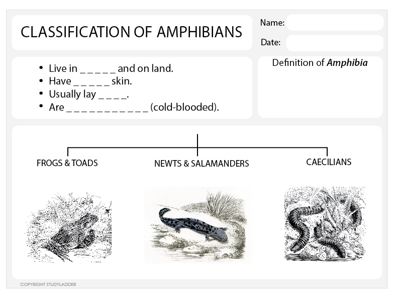 Classification of Amphibians Worksheet Science skills online – Classification Worksheet Biology