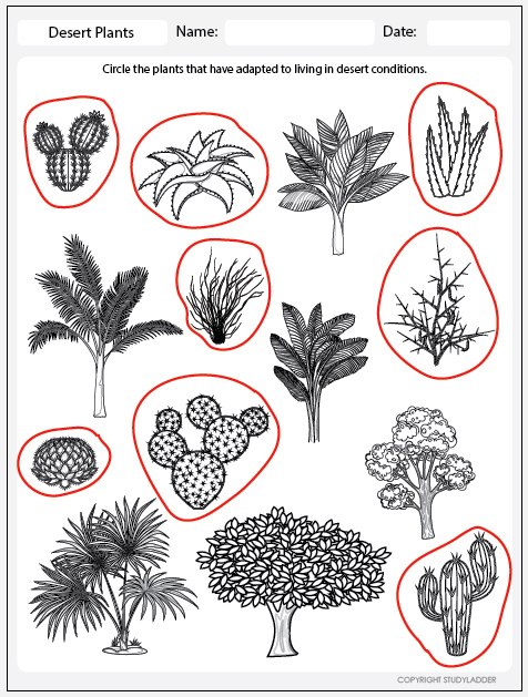 desert plants worksheet answers studyladder interactive learning games. Black Bedroom Furniture Sets. Home Design Ideas