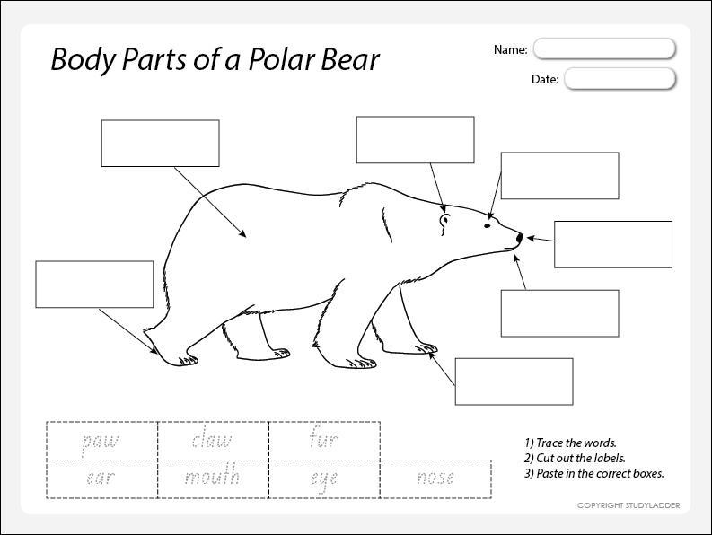 black bear body parts diagram