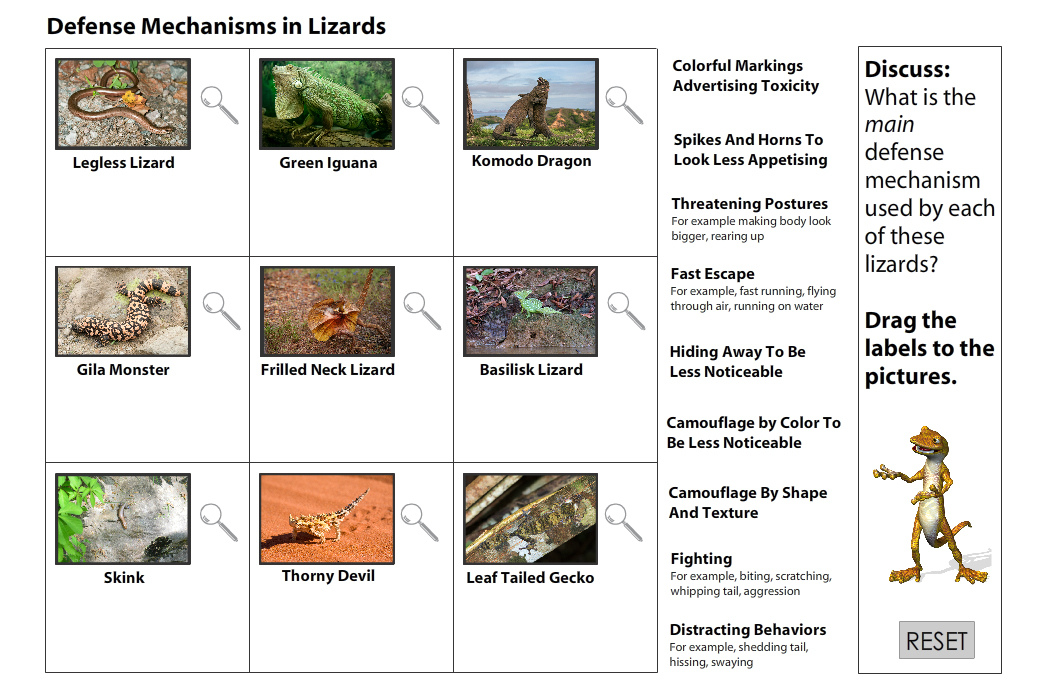 Lizards Defense Mechanisms