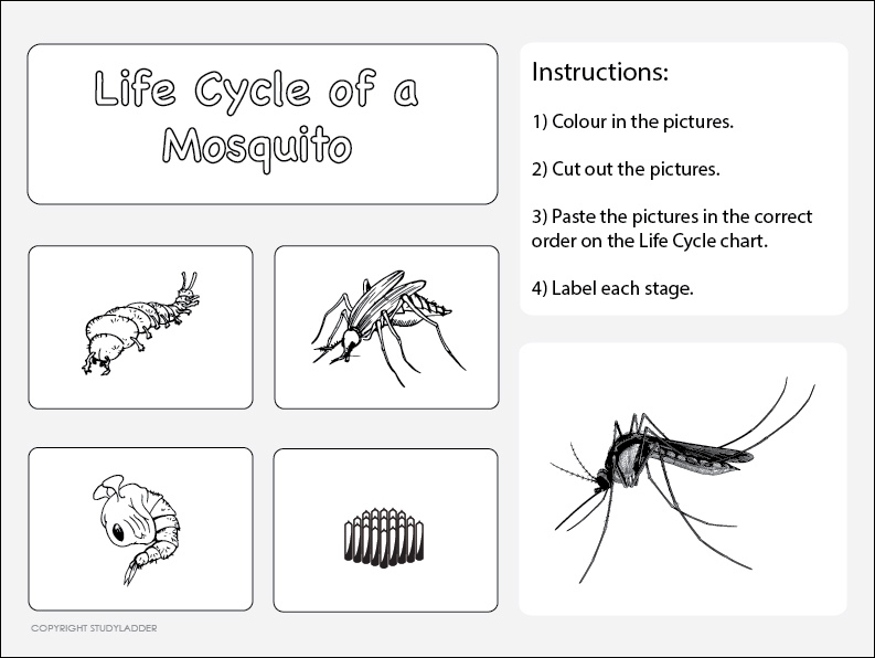 Life Cycle Of A Mosquito Worksheet 2 Science Skills Online Interactive Activity Lessons: Worksheet 2 At Alzheimers-prions.com